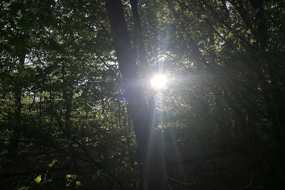 Bild eines Waldes mit Sonne. © Privat